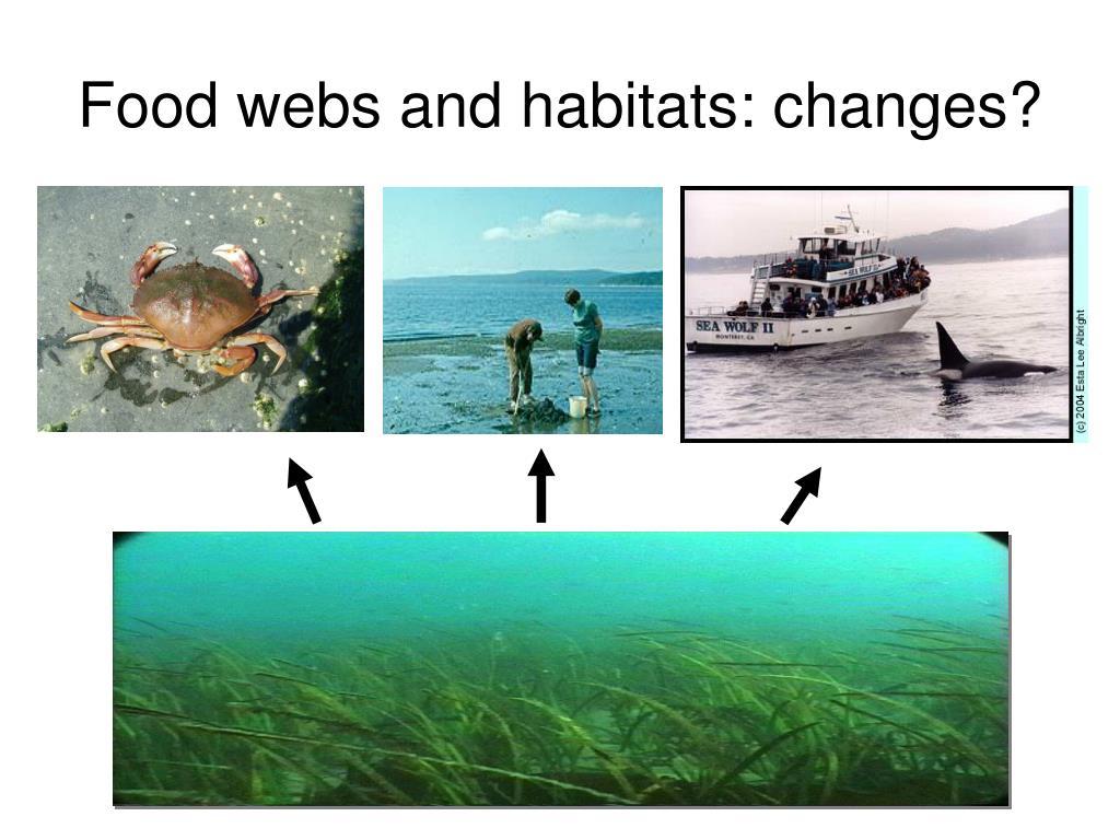 Food webs and habitats: changes?