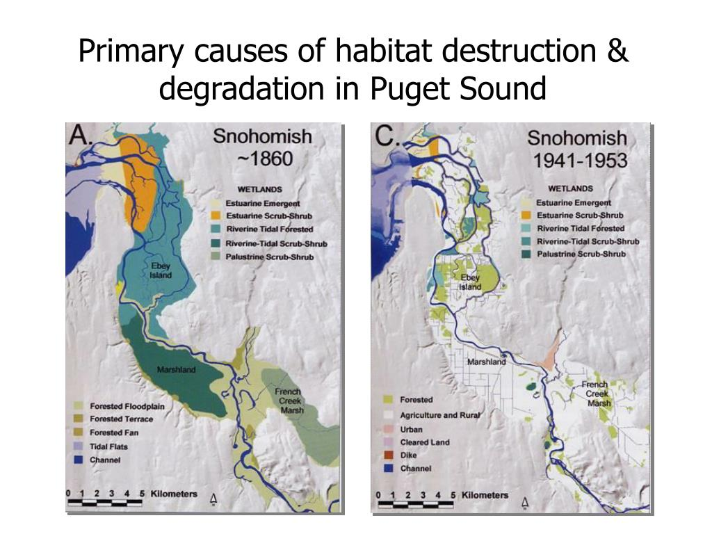 Primary causes of habitat destruction & degradation in Puget Sound