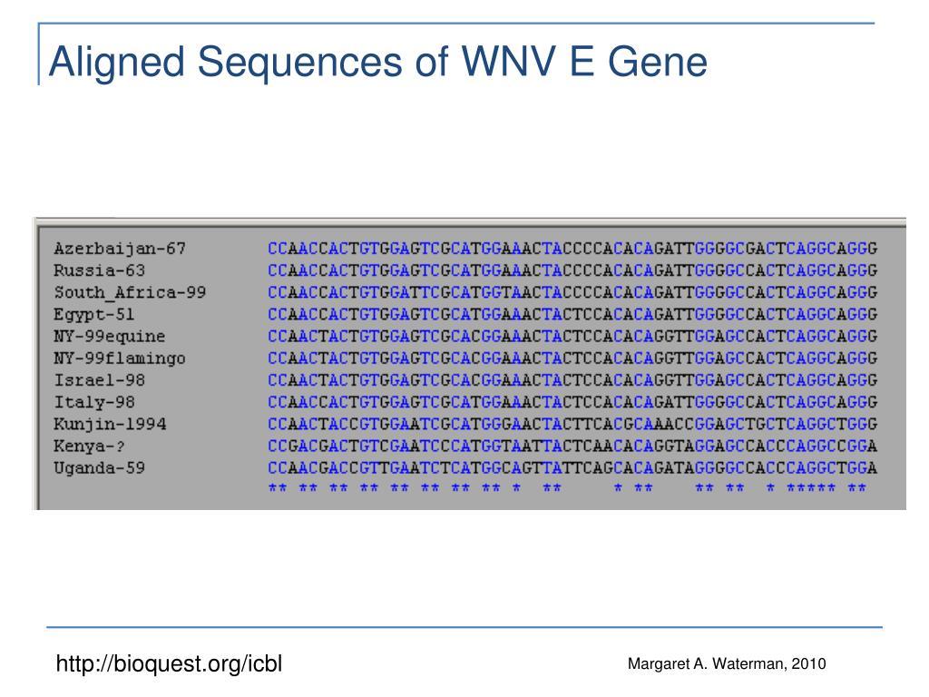 Aligned Sequences of WNV E Gene