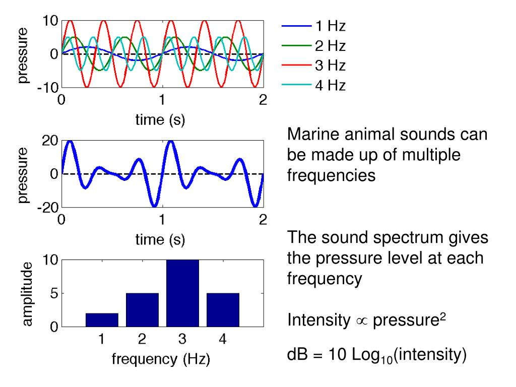 Marine animal sounds can be made up of multiple frequencies