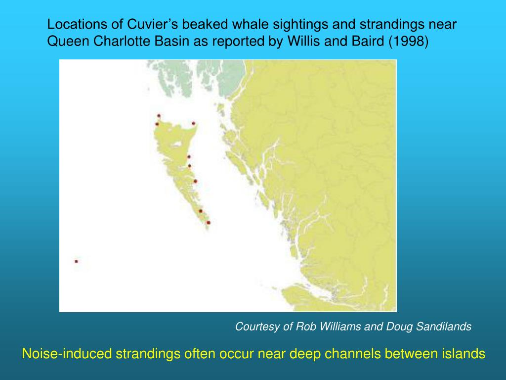 Locations of Cuvier's beaked whale sightings and strandings near Queen Charlotte Basin as reported by Willis and Baird (1998)