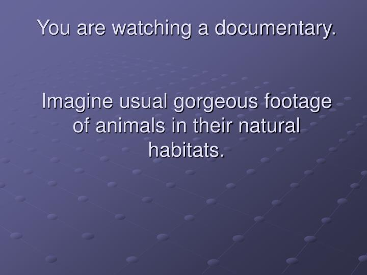 You are watching a documentary imagine usual gorgeous footage of animals in their natural habitats