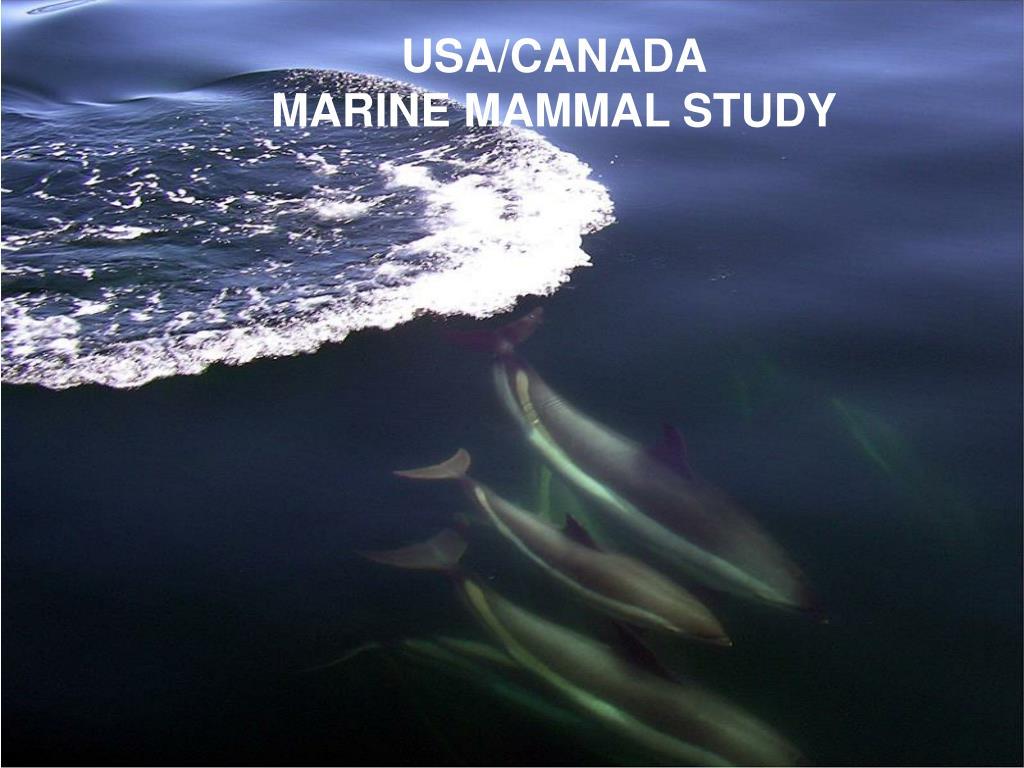 usa canada marine mammal study l.