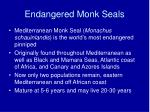 endangered monk seals