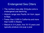 endangered sea otters