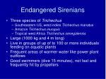 endangered sirenians