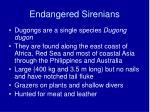 endangered sirenians24