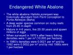 endangered white abalone