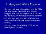 endangered white abalone49