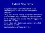 extinct sea birds