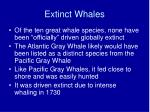 extinct whales