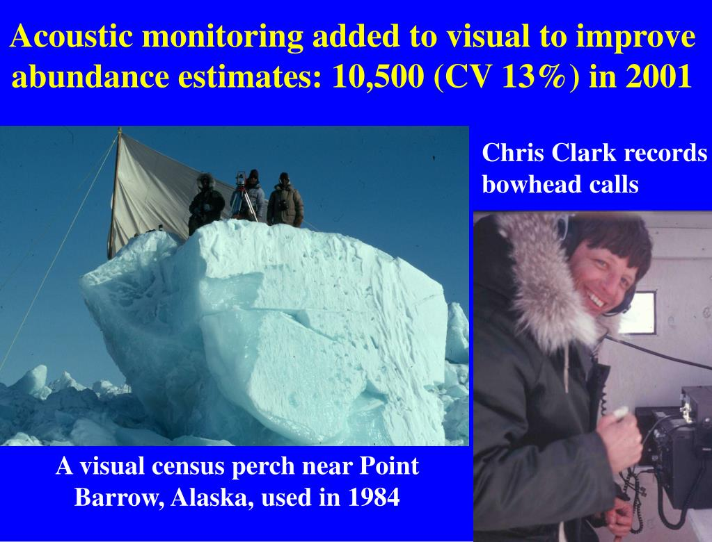 Acoustic monitoring added to visual to improve abundance estimates: 10,500 (CV 13%) in 2001