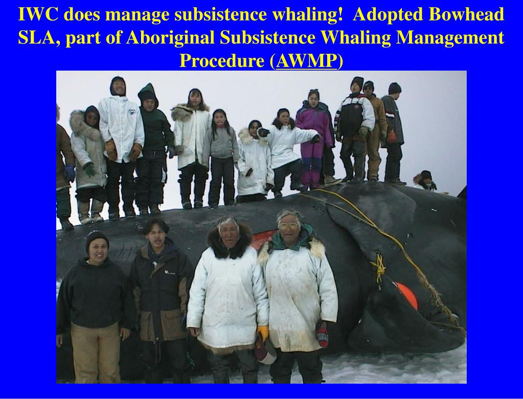 IWC does manage subsistence whaling!  Adopted Bowhead SLA, part of Aboriginal Subsistence Whaling Management Procedure (
