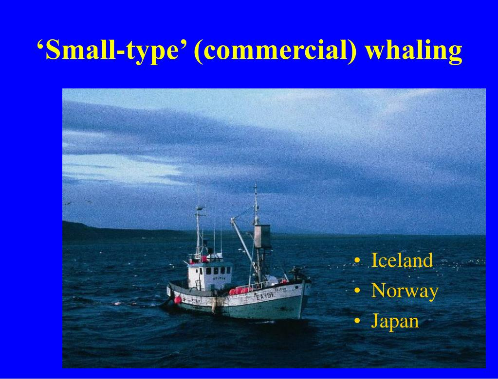 'Small-type' (commercial) whaling