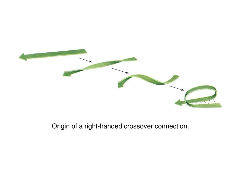Origin of a right-handed crossover connection.