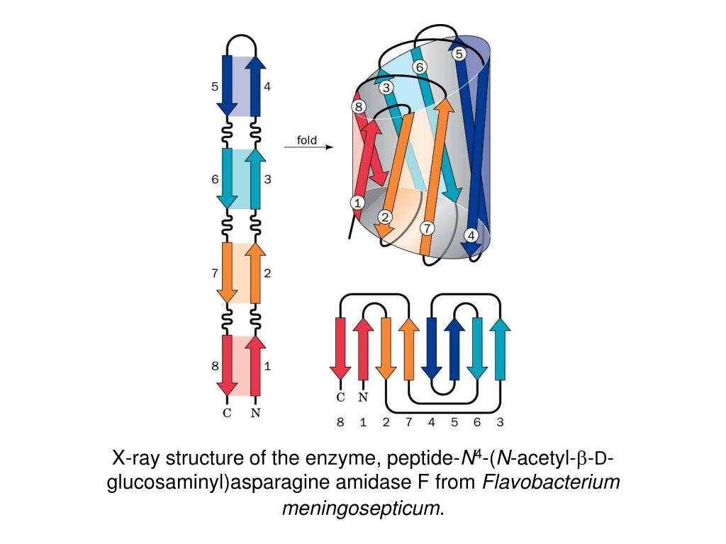 X-ray structure of the enzyme, peptide-