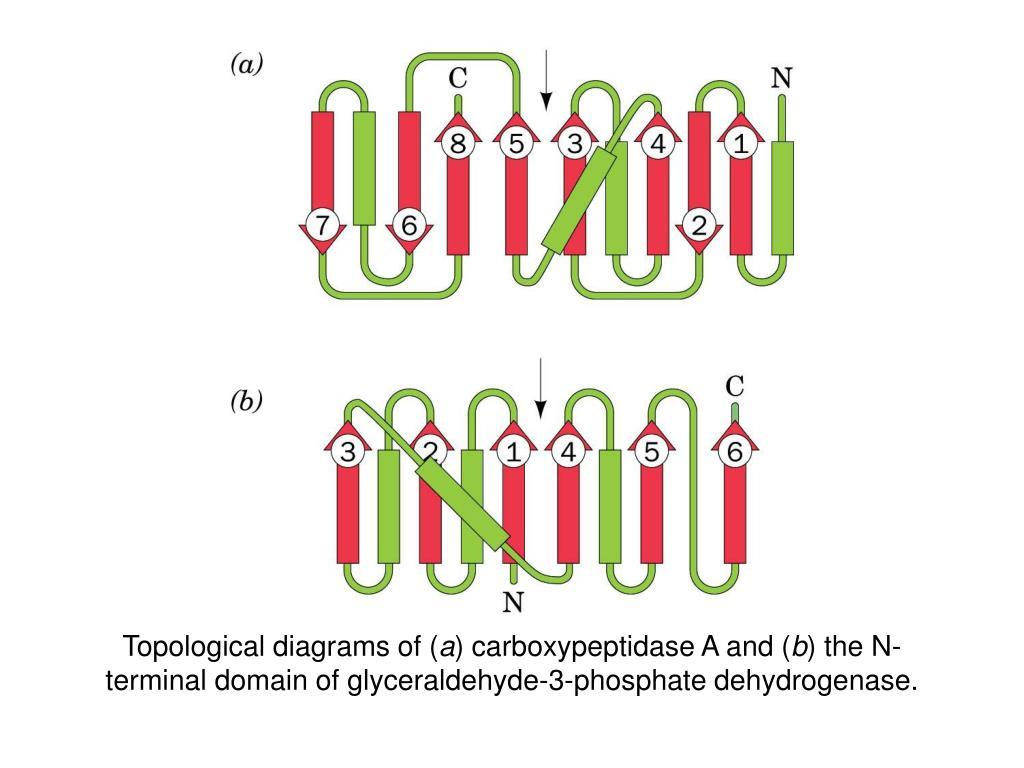 Topological diagrams of (