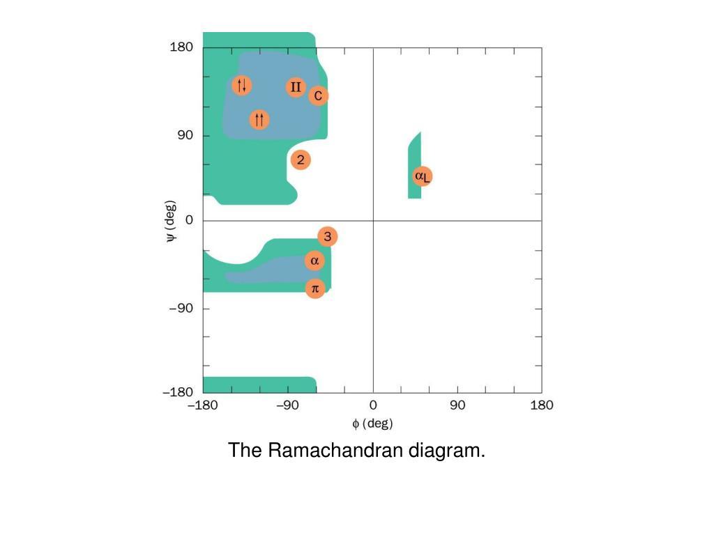 The Ramachandran diagram.