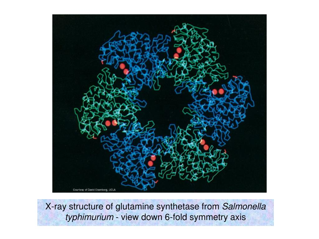 X-ray structure of glutamine synthetase from
