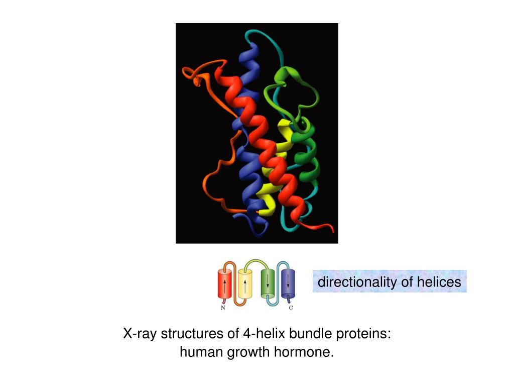 directionality of helices