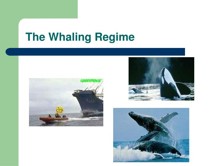 The whaling regime