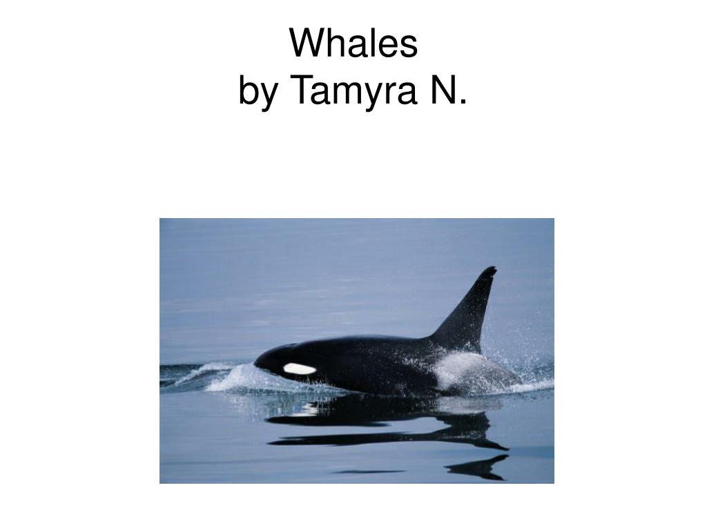 whales by tamyra n l.