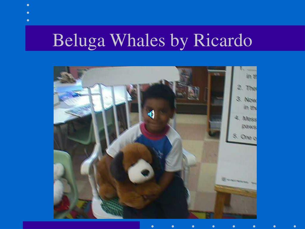 beluga whales by ricardo l.