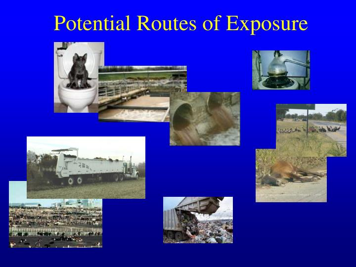 Potential routes of exposure