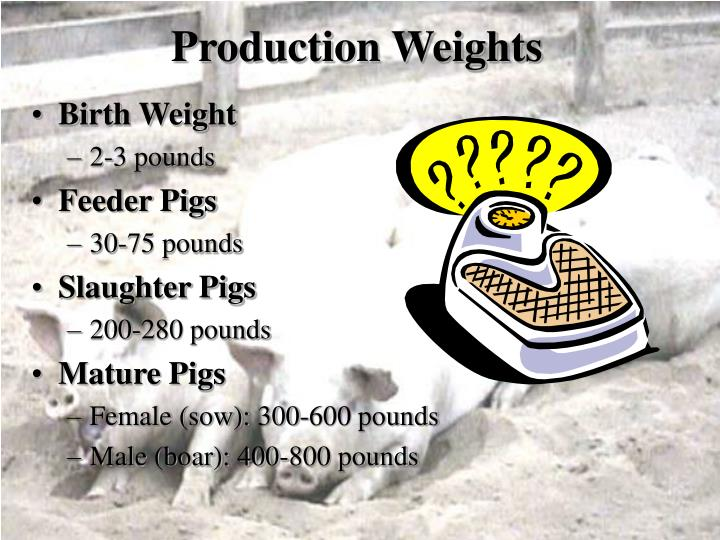 Production Weights