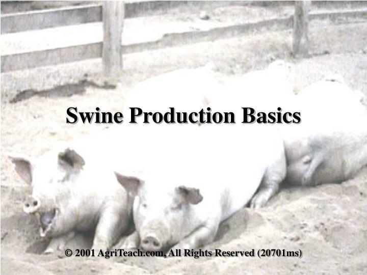 Swine Production Basics