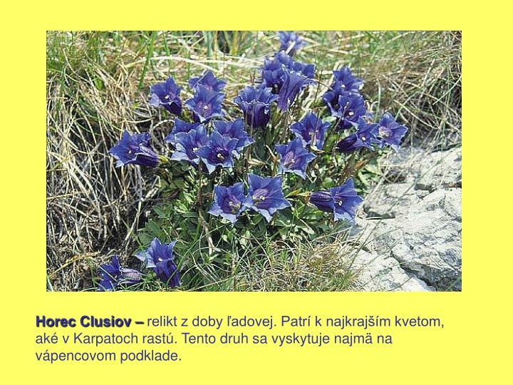 Horec Clusiov –