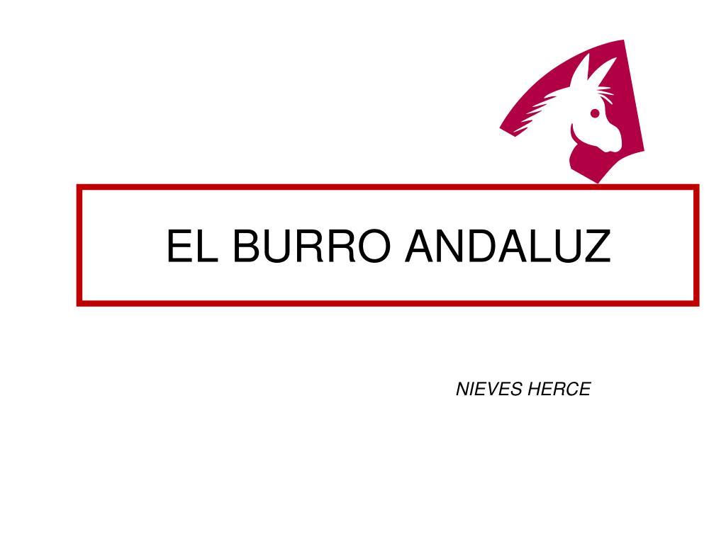 el burro andaluz l.