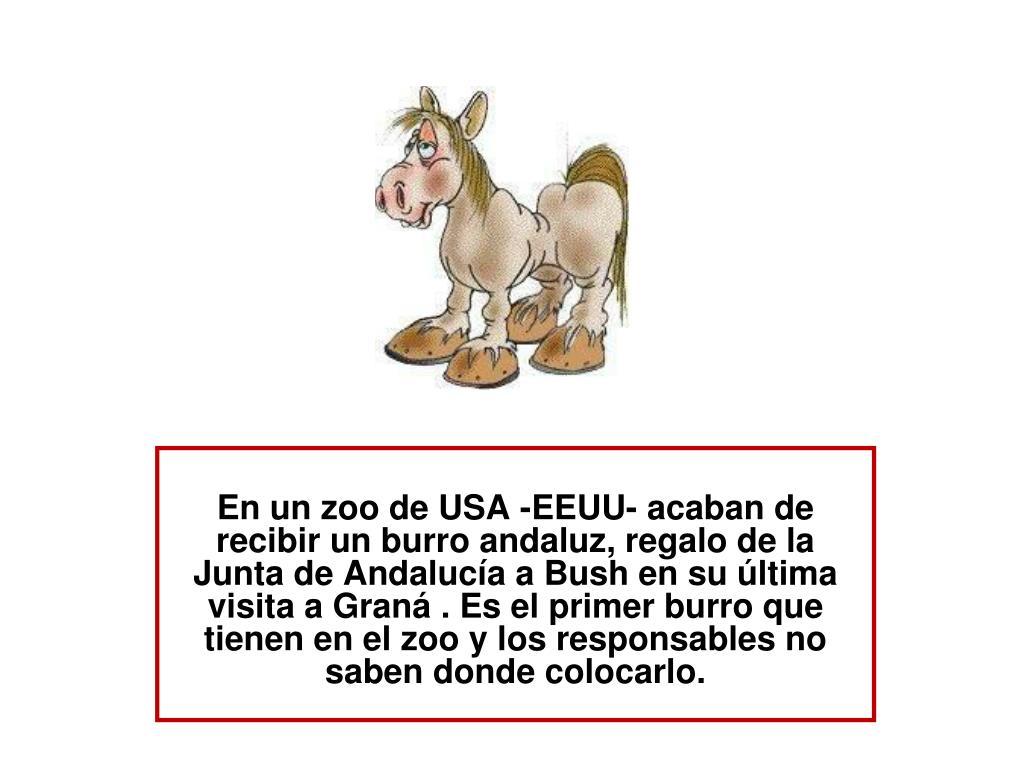 En un zoo de USA -EEUU- acaban de recibir un burro andaluz, regalo de la Junta de Andalucía a Bush en su última visita a Graná . Es el primer burro que tienen en el zoo y los responsables no saben donde colocarlo.