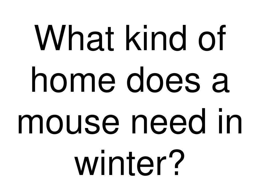 what kind of home does a mouse need in winter l.