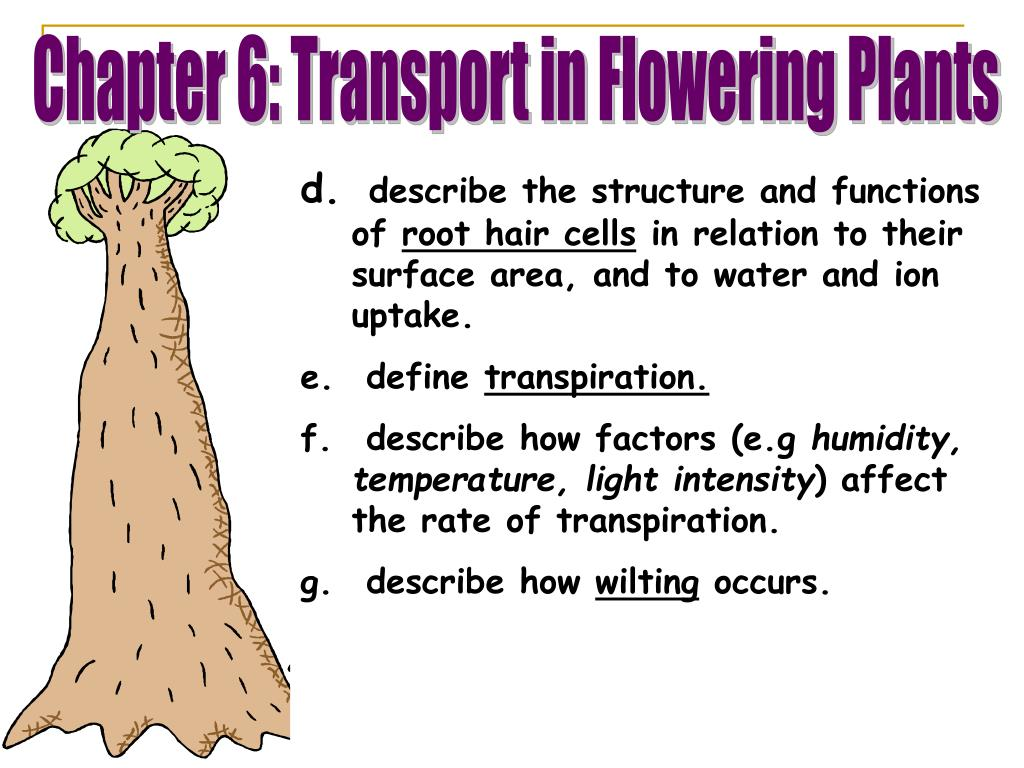 PPT - state the functions of xylem and phloem. identify ...