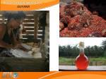 agrotourism snapshot guyana22