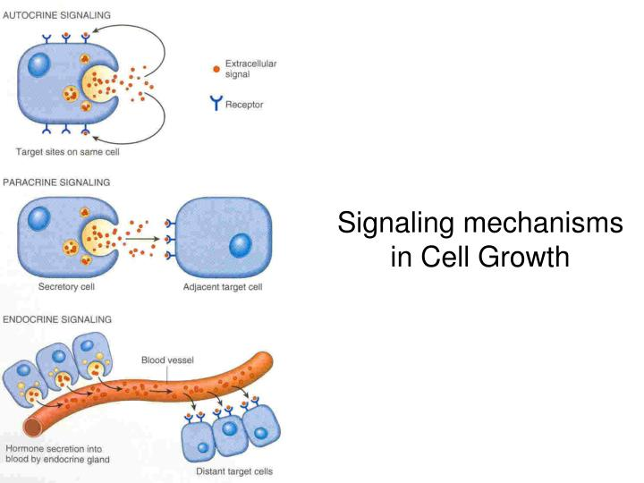 Signaling mechanisms in Cell Growth