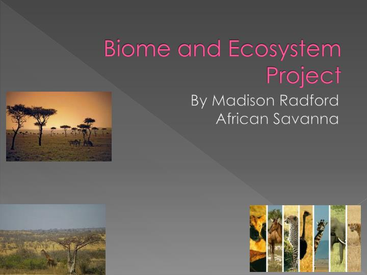 biome and ecosystem project n.