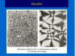 sferuliti