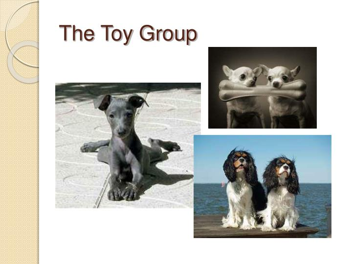 the toy group n.