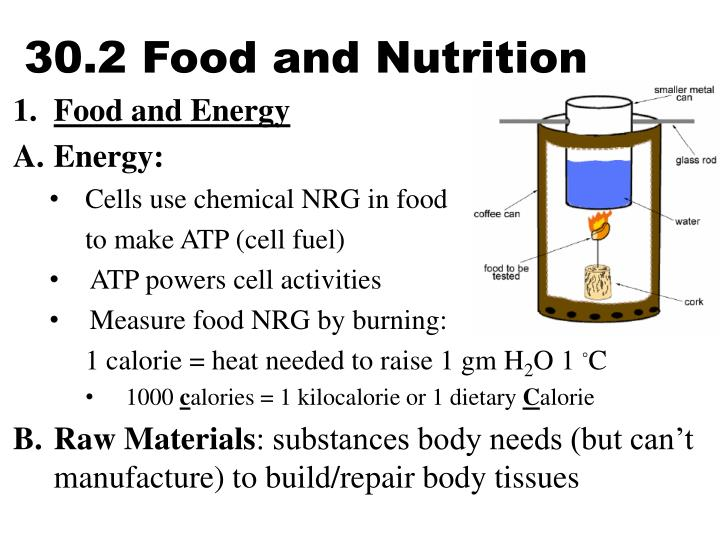 30 2 food and nutrition n.