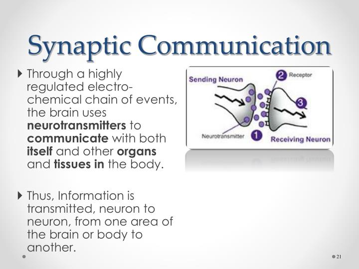 communication process neurons brain essays Neurons have specialized projections called dendrites and axons dendrites bring information to the cell body and axons take information away from the cell body information from one neuron flows to another neuron across a synapse the synapse contains a small gap separating neurons the synapse.