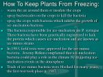how to keep plants from freezing