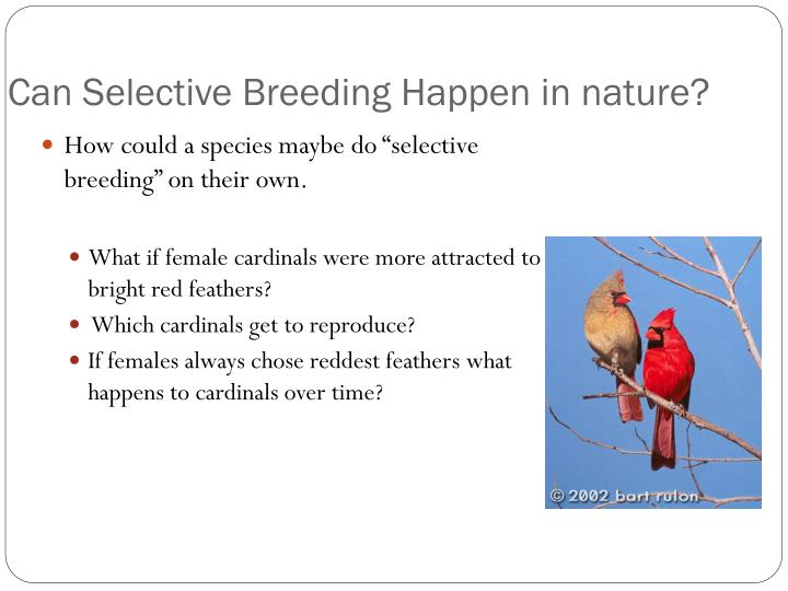 how has selective breeding helped global How has selective breeding benefited human a means of selective breeding, but only has a means helped to furtherour knowledge of global warming and.