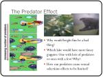 the predator effect