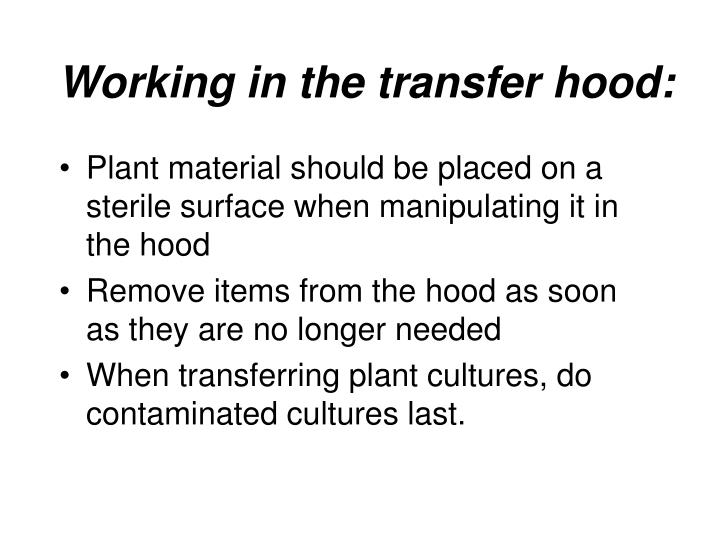 Working in the transfer hood: