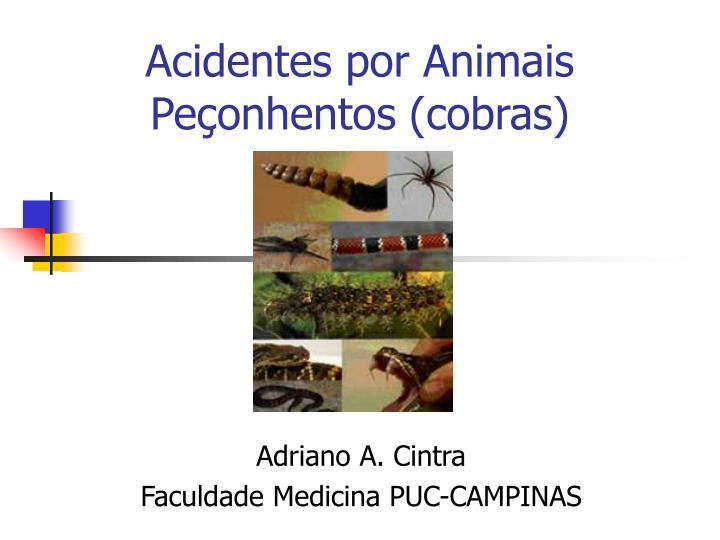 acidentes por animais pe onhentos cobras n.