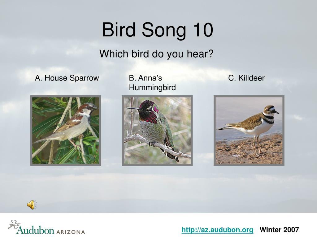 Bird Song 10