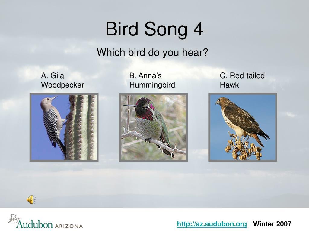 Bird Song 4