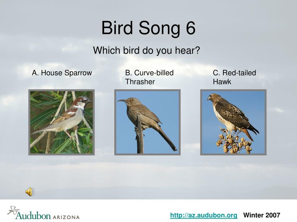 Bird Song 6